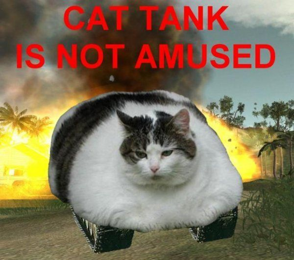 Cats are funny and we ve got the pictures to prove it