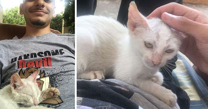 Guy Wakes Up From A Nap To A Stray Kitten Sleeping His Stomach Decides