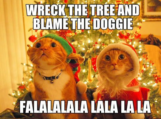 Let s Sing To her Christmas Animals Christmas Cats Merry Christmas Funny Christmas Christmas