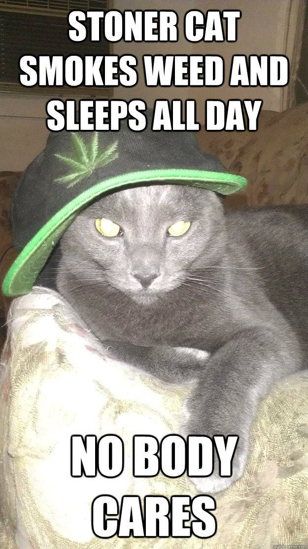 STONER CAT SMOKES WEED AND SLEEPS ALL DAY NO BODY CARES