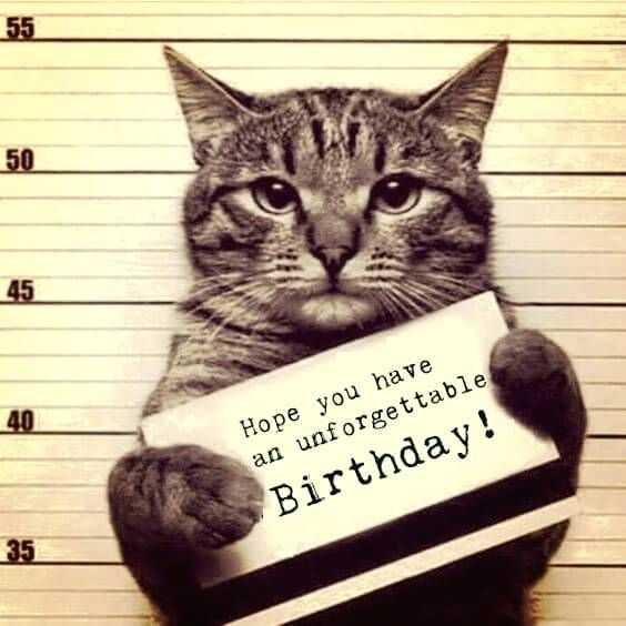 happy birthday cat funny meme with a in police custody 50th cathy images happy birthday cat