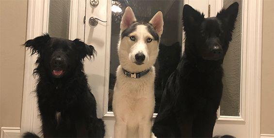 Natalie Mangum s three dogs