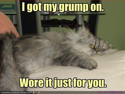 Friday Funny Cats