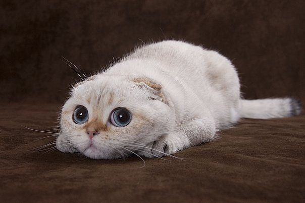 Funny Cat Sad Face Image