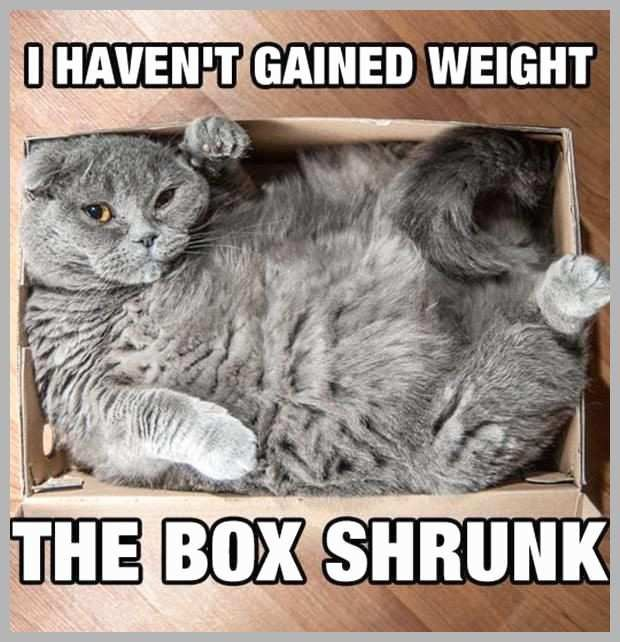 Funny Fat Cat Memes Unique 25 Best Ideas About Fat Cats Funny Pinterest 40