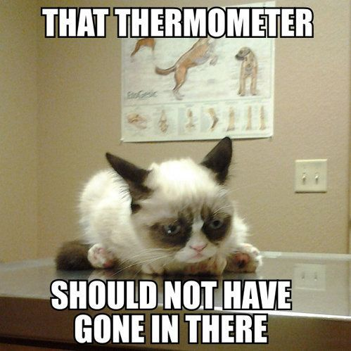 That thermometer should not have gone in there Grumpy Kitty Sad Kitty