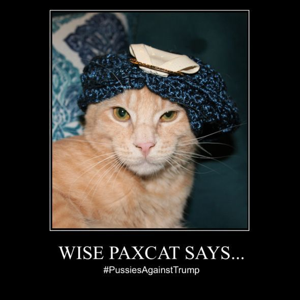Catch the Marvelous Funny Cat Memes Political - Hilarious ...