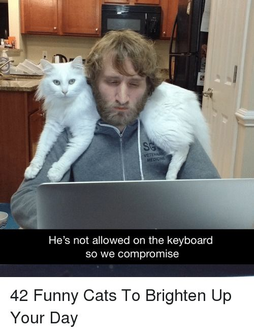 Cats Funny and Keyboard He s not allowed on the keyboard so we promise