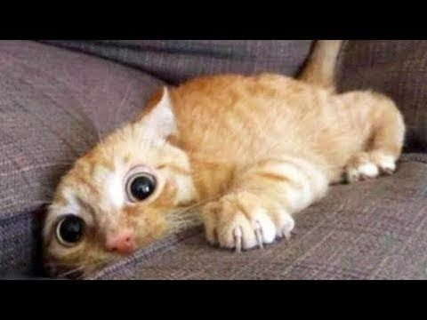 Top 200 Highlights of Animals VERY FUNNY ANIMALS