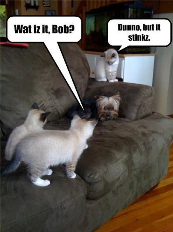 Quotes Funny Cats And Dogs QuotesGram