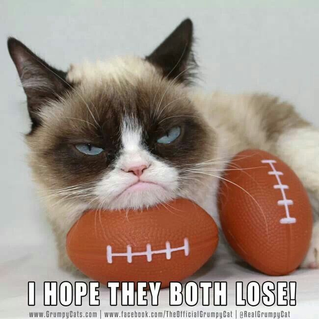 Gather the Stunning Funny Football Cat Memes