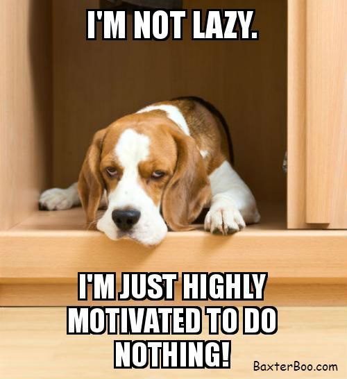 Gather the Stunning Funny Quotes with Dog Pictures