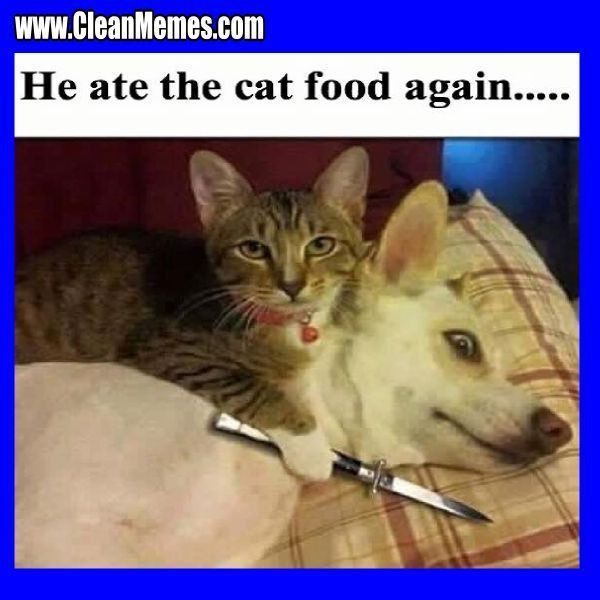Clean Funny Cat Memes ideas