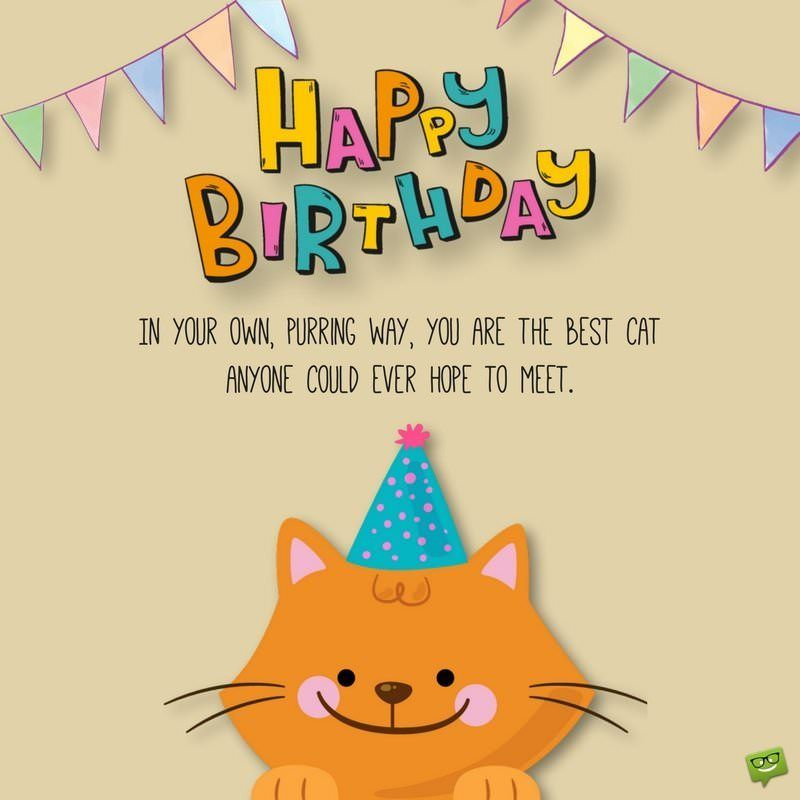 Happy Birthday In your own purring way you are the best cat anyone could ever hope to meet