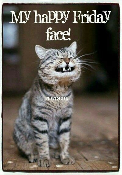 "Kitty Cat ""This is my happy Friday face ending the week s rat race I m now off to an imaginary place …"