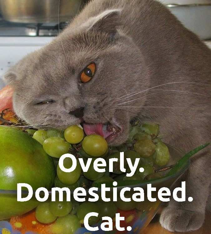 Cat is too domesticated