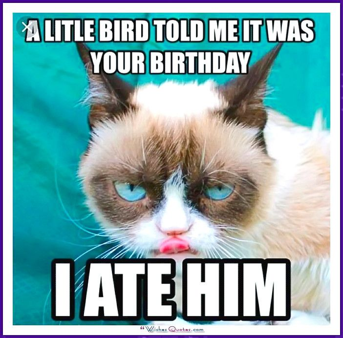 Birthday Meme with a Cat A little bird told me it was your birthday