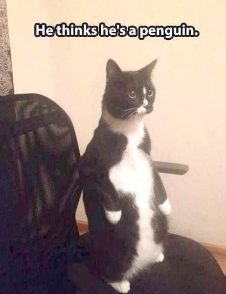 Funny s With Captions Funny Cat Pics Funny Cat Captions Cute Animals With