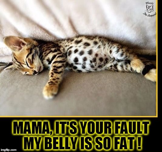 The Case of the Fat Baby Cat