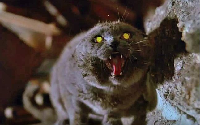 """Video screengrab of zombie kitty in """"Pet Sematary"""""""