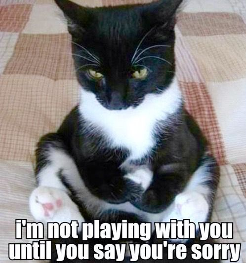This angry cat is not playing with you anymore until you say you re sorry