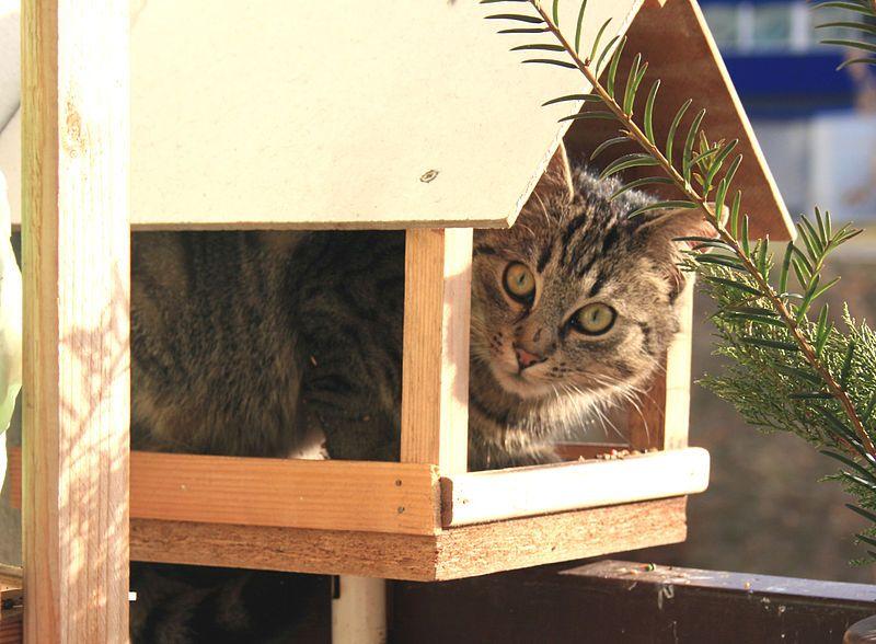 File Kočka v krmtku 2