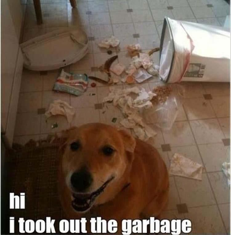 18 Funny Animal Pics for Your Tuesday and Everyday