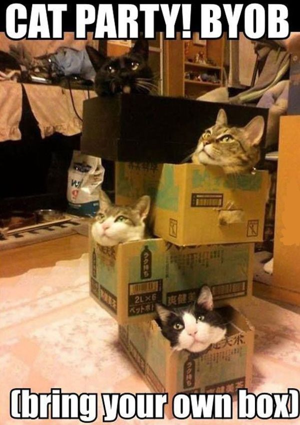 Cat Party Bring Your Own Box the link to view today s funniest pictures