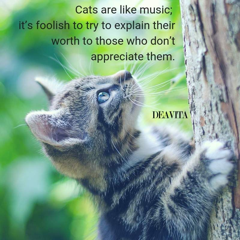 funny cats quotes and sayings about their character