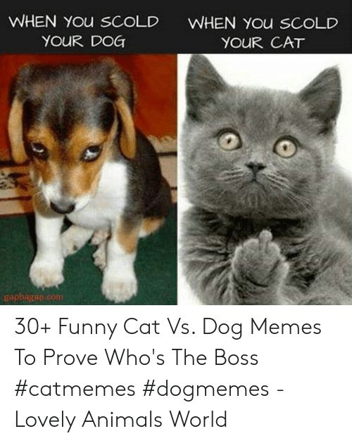 Animals Funny and Memes WHEN You sCoLD YOUR DOG WHEN You SCOLD YOUR