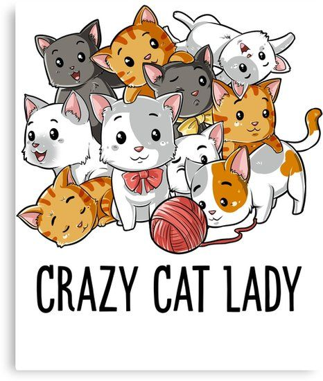 Gather the Unbelievable Funny Crazy Cat Lady Pictures