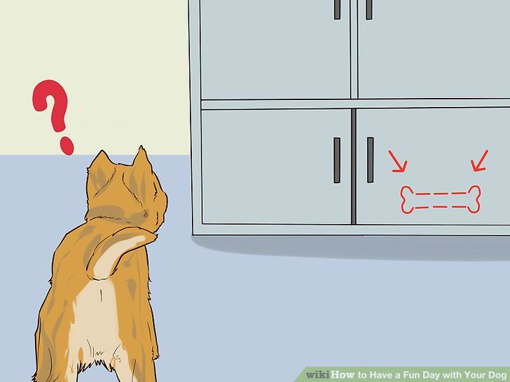Image titled Have a Fun Day with Your Dog Step 8