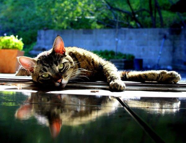 Liam sunbathing at his front door