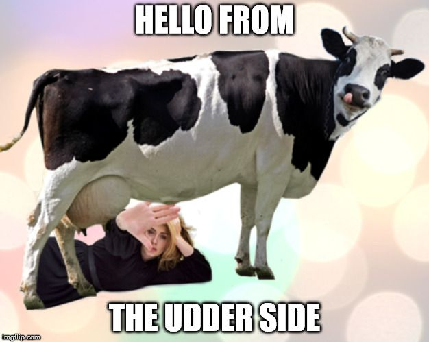 HELLO FROM THE UDDER SIDE image tagged in adele