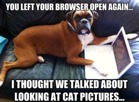 Dog meme monday funny dog memes cat dog meme dog 480x351 Cat and dog funny