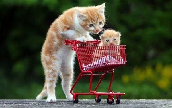 Cats are more than pets or animals sometimes they can be very funny and interesting These funny cat pictures will lead you into the world of felines