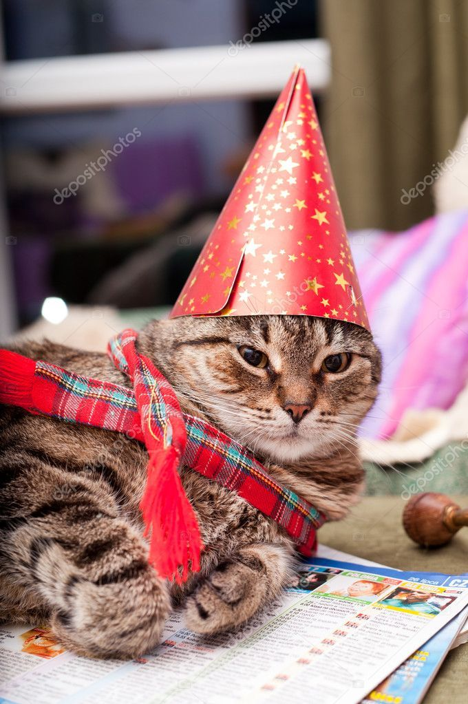 Funny fat cat wearing a party hat and a scarf — Stock