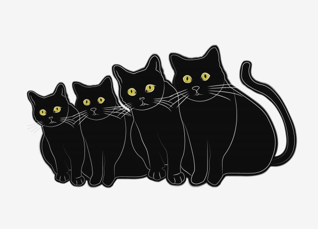 Gather the Unique Funny Cat Pictures for Free