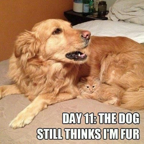 Funny Cat Memes Fur