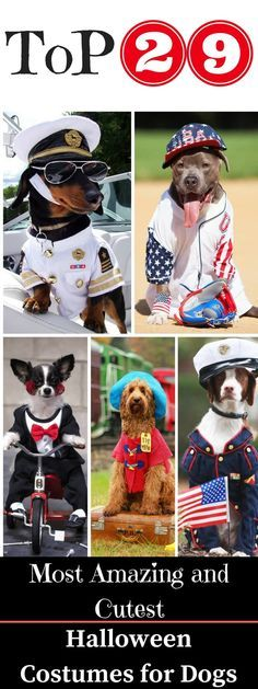 23 Unbelievable Halloween Costume Ideas For Your Dog