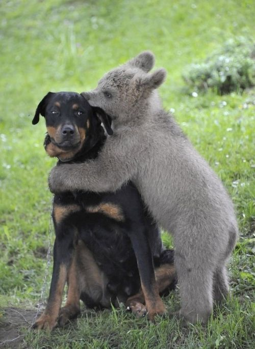 A baby bear giving a suspicious dog a kiss