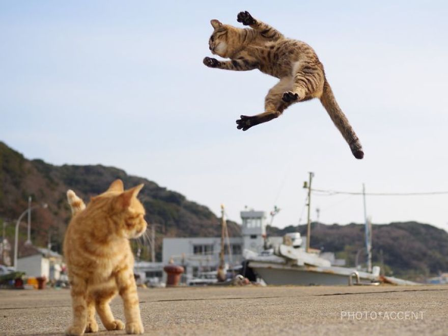 Gather the Unique Pictures Of Funny Ninja Looking Cat
