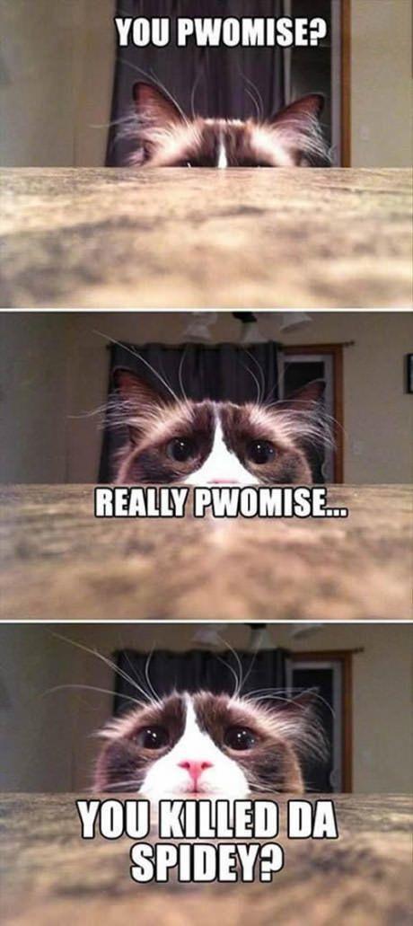 Gather the Wonderful Cat Memes Funny Kill