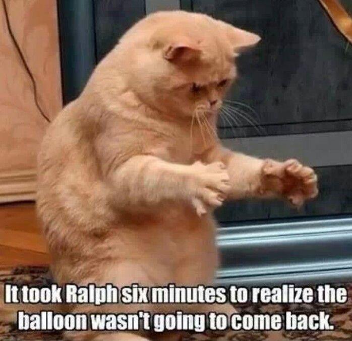 Bahaha Funny Cat Humor Funny Cat Captions Cat Memes Hilarious Funny Cats
