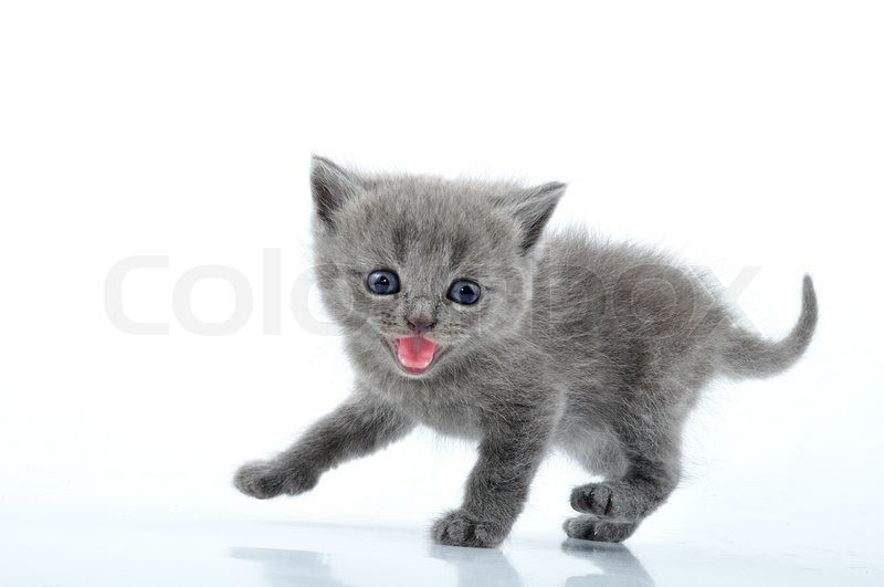 Gather the Wonderful Funny Background Pictures Cat 1336 X