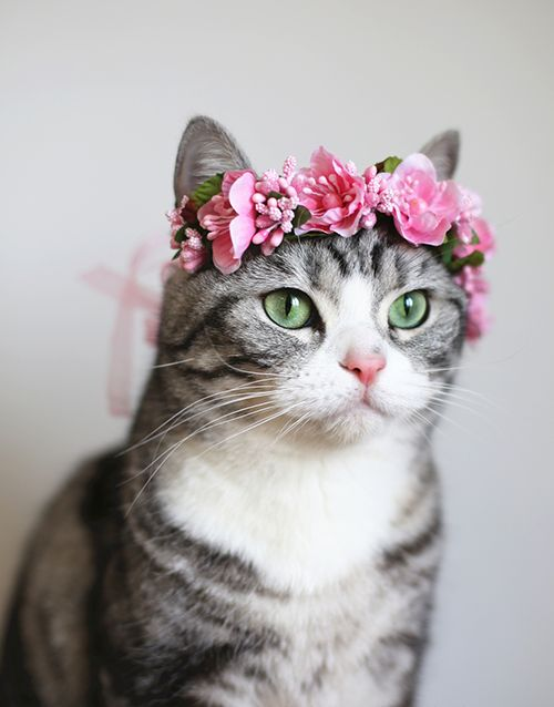 Gather the Wonderful Funny Cat Pictures Flower