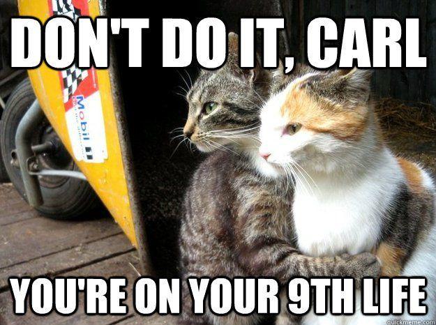 Gather the Wonderful Funny Cat Teeth Memes