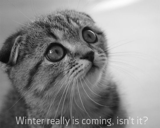 funny winter is ing scared cat face pics