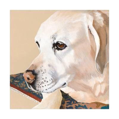 dlynn roll dlynn s dogs shell u L Q11AIPV0