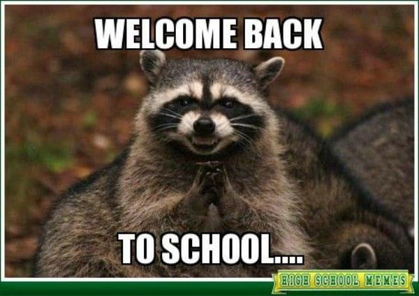 Teacher Meme Raccoon